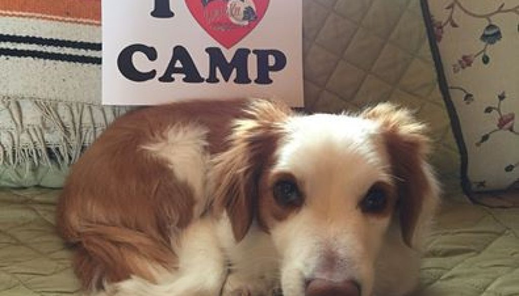 I love camp sign next to a puppy.
